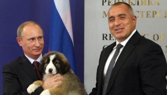 Vladimir Putin Dog Buffy Vladimir Putin's New D...