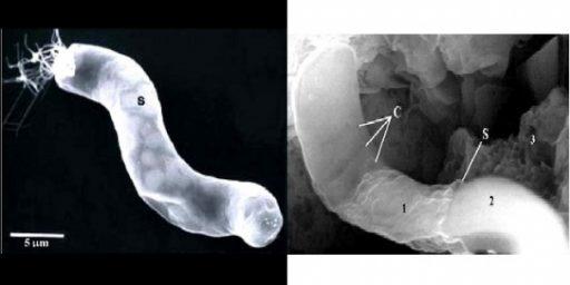 Alien Life Found On Meteorite?