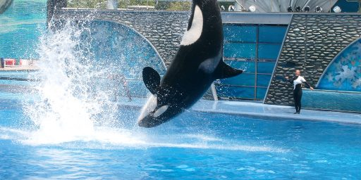 "PETA Sues Sea World For ""Enslaving"" Whales"