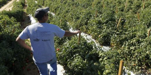 Alabama Immigration Law Causing Produce To Rot In The Fields