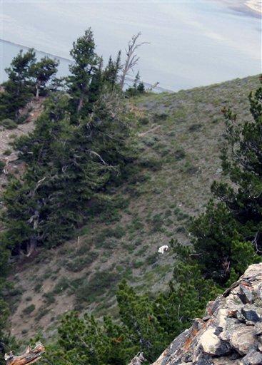 Utah Goat Man Photograph