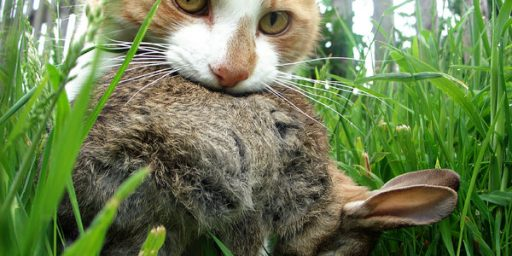 Killer Kitties Create Carnage