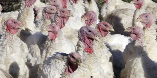 Explained: Why Turkeys Have The Same Name As Turkey
