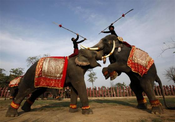 Mahouts and their elephants take part in a mock fight as part of regular training exercises at an elephant conservation park in Ayutthaya province