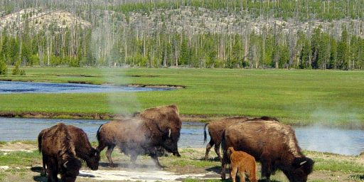 Yellowstone's 'Zone Of Death': Where You Can Get Away With Murder