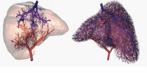 3D Printed Organs Coming Soon