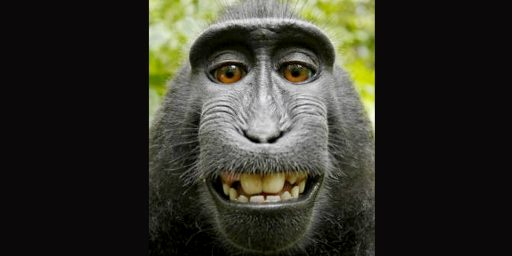 If A Monkey Takes A Selfie, Who Owns The Copyright?