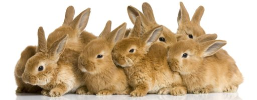 Pope: Don't Breed Like Rabbits. Or Use Birth Control.