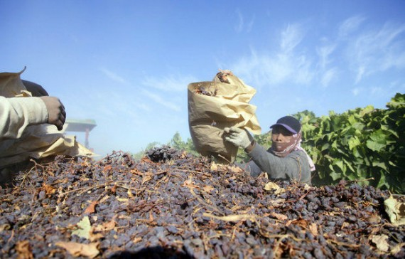 Raisin Farmers