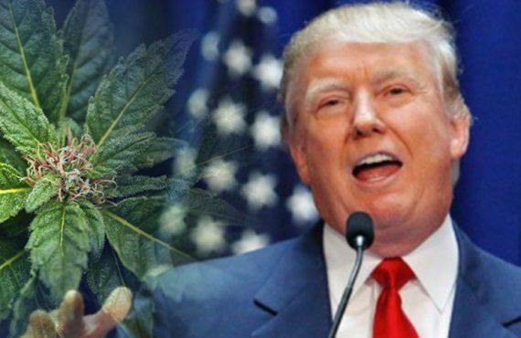 Trump Marijuana