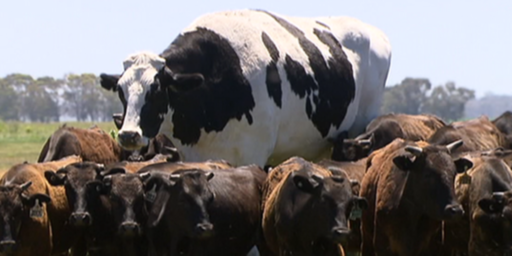 I For One Welcome Our Giant Australian Bovine Overlords