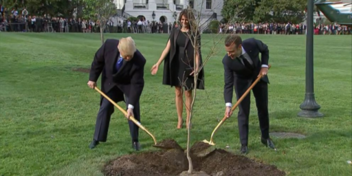 Everything Trump Touches Dies: French Tree Edition