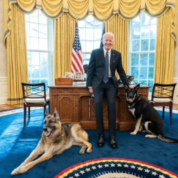 President Joe Biden poses with the Biden family dogs Champ and Major Tuesday, Feb. 9, 2021, in the Oval Office of the White House.