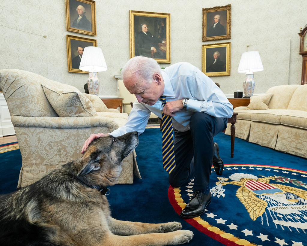 President Joe Biden pets the Biden family dog Champ in the Oval Office of the White House Wednesday, Feb. 24, 2021, prior to a bipartisan meeting with House and Senate members to discuss supply chains.